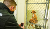Bowman, Ally meet adorable rescue animals at Humane Society