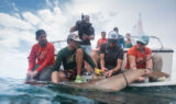 Tag, you're it: Kahne gets up close and personal with sharks