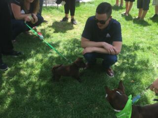 Puppies and food trucks on 'Alex Bowman Day'